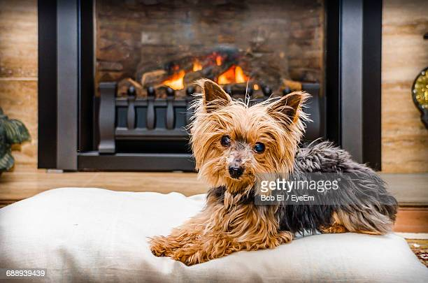 Portrait Of Yorkshire Terrier Relaxing On Cushion By Fireplace At Home