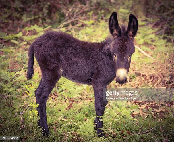 portrait of young donkey - jackass images stock pictures, royalty-free photos & images