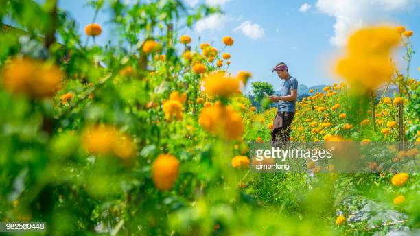 Portrait Of Young Man using smart phone in a yellow flower farm