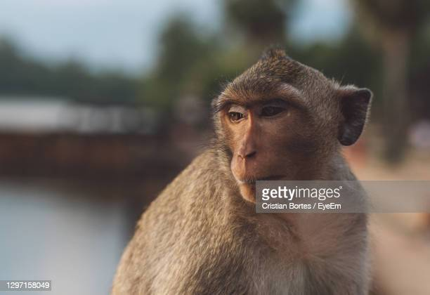 portrait of young monkey sitting outdoors - bortes foto e immagini stock