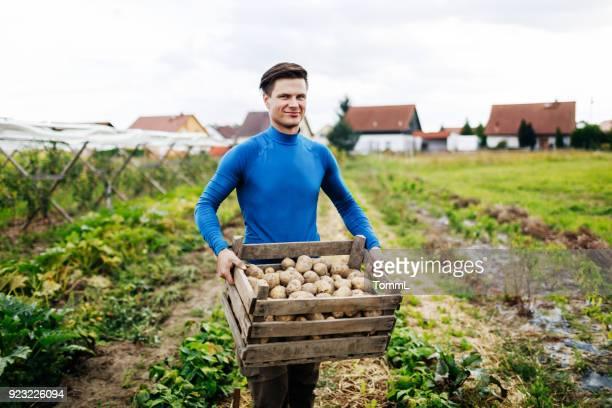 portret van jonge stedelijke boer worden getoond rendement van aardappelen - rauwe aardappel stockfoto's en -beelden