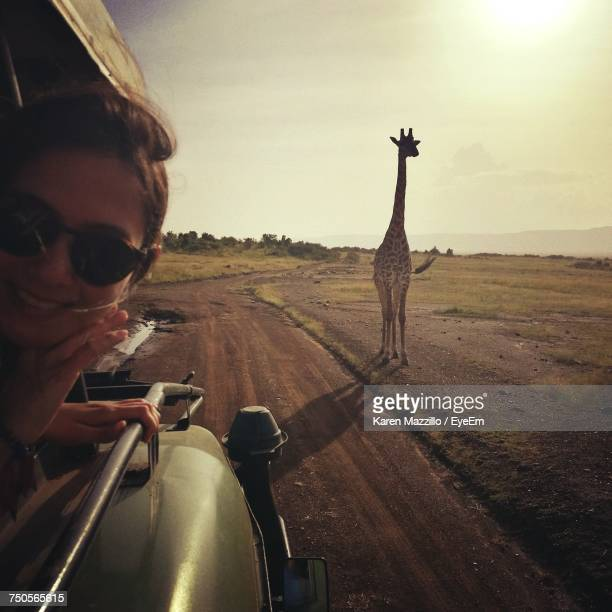 portrait of young woman wearing sunglasses traveling in car while giraffe walking in background on field - white giraffe stockfoto's en -beelden