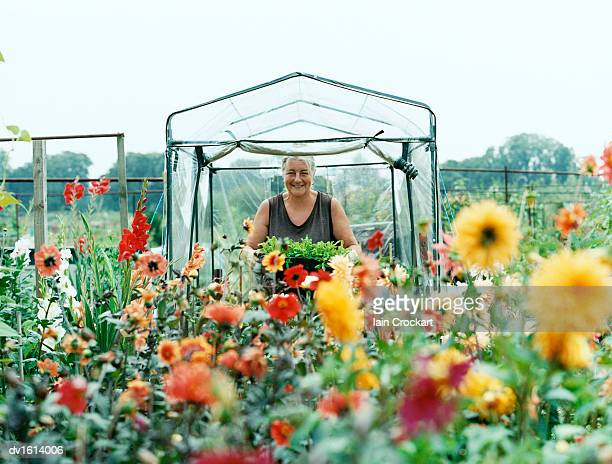 portrsit of a senior woman standing in her garden, holding a potted plant - abundance stock pictures, royalty-free photos & images