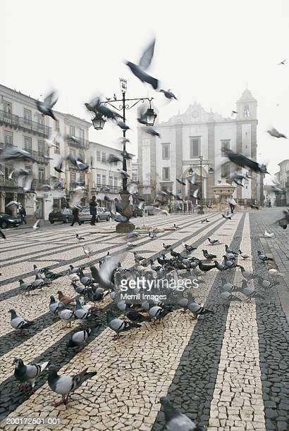 Portugal, Alentejo, Evora, pigeons in Praca do Giraldo