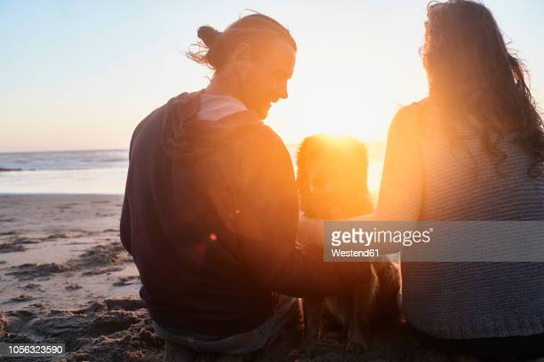 portugal, algarve, couple with dog on the beach at sunset - back lit stock pictures, royalty-free photos & images