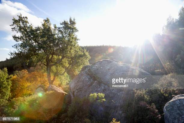 portugal, algarve, monchique, foia, rock and tree on mountain in backlight - モンシケ ストックフォトと画像