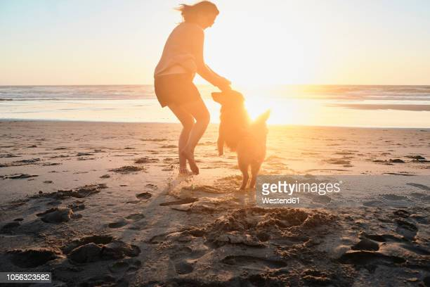 portugal, algarve, woman with dog on the beach at sunset - carefree stock pictures, royalty-free photos & images