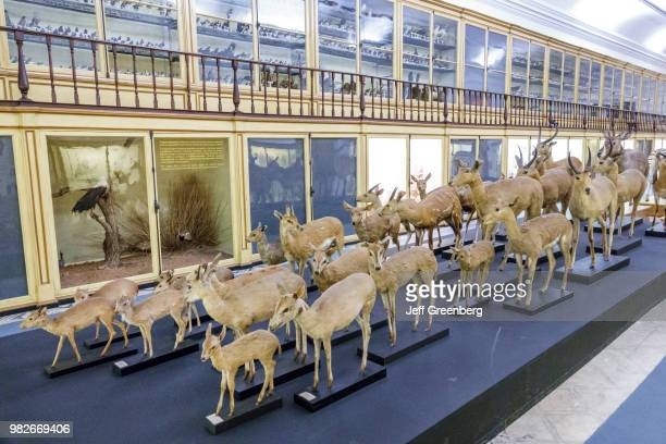 Portugal Coimbra University of Coimbra Museu da Ciencia Science Museum Natural History and Zoology Gallery Antelopes