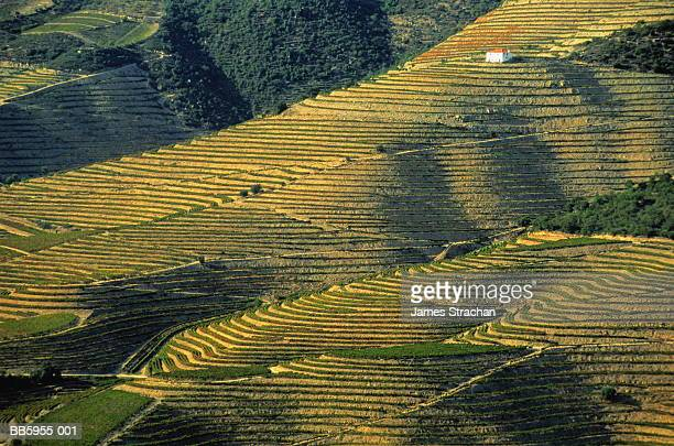 portugal, douro valley, lone house and terraced vineyards - james strachan stock pictures, royalty-free photos & images