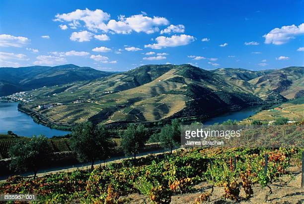 portugal, douro valley, river douro, vineyards in foreground - james strachan stock pictures, royalty-free photos & images