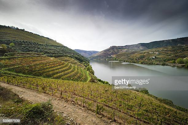 Portugal, Douro Valley, Vineyards with river