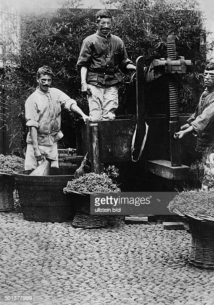 men making wine probably in the 1910s Photo MKoch