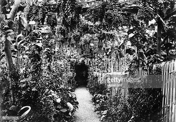 pergola grown over with wine leaves a traditional sight on Madeira probably in the 1910s Photo MKoch