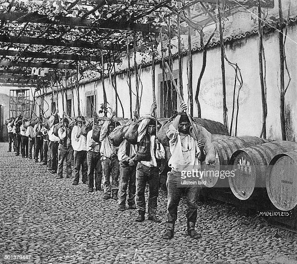 transport of wine from the vineyards to the warehouse in wineskins probably in the 1910s Photo FranzOttoKoch