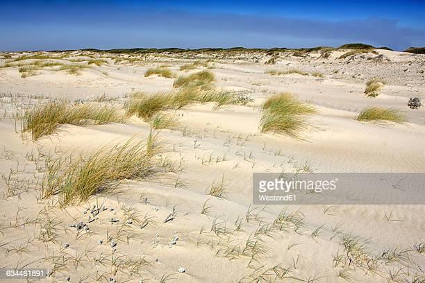 portugal, natural reserve of sao jacinto dunes - duna de arena fotografías e imágenes de stock