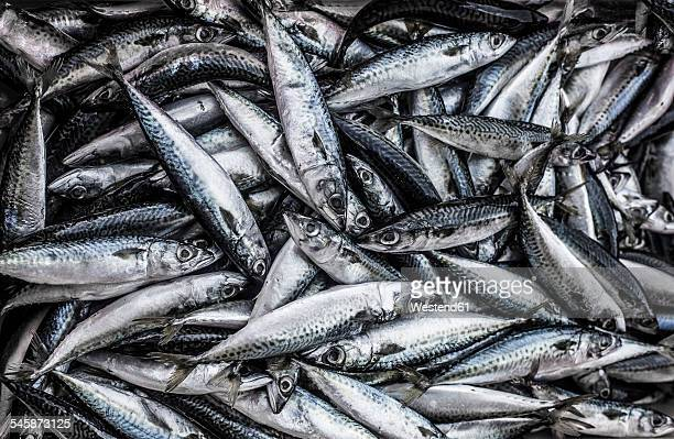 portugal, sagres, mackerel fish - mackerel stock pictures, royalty-free photos & images