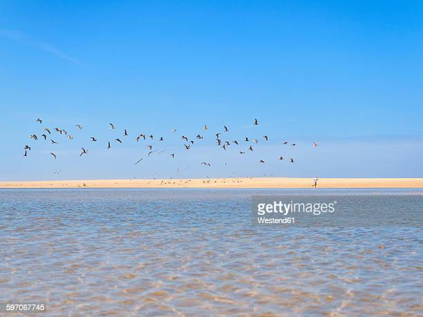 Portugal, Sao Pedro de Moel, view to the beach with jogging man and flock of birds in the foreground