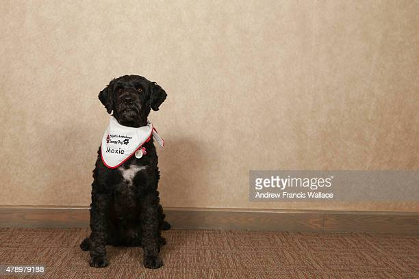 Portuguese water dog 'Moxie' June 24, 2015. Therapy dogs will be roaming the Pan Am village helping stressed athletes.