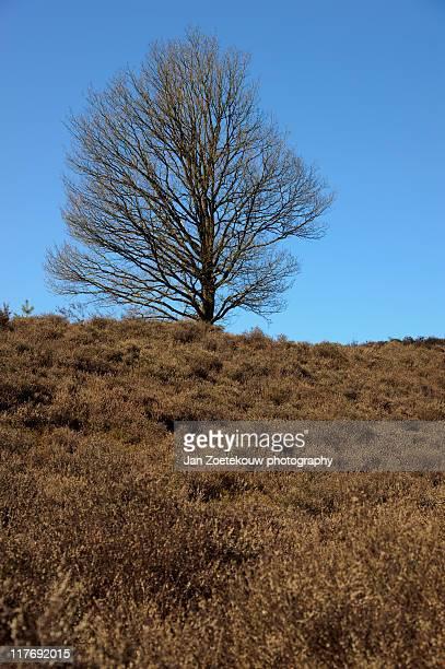 posbank heathland - posbank ストックフォトと画像