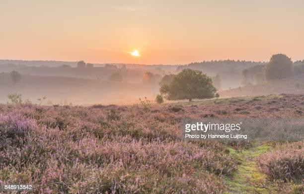 posbank sunrise, veluwezoom national park - posbank ストックフォトと画像