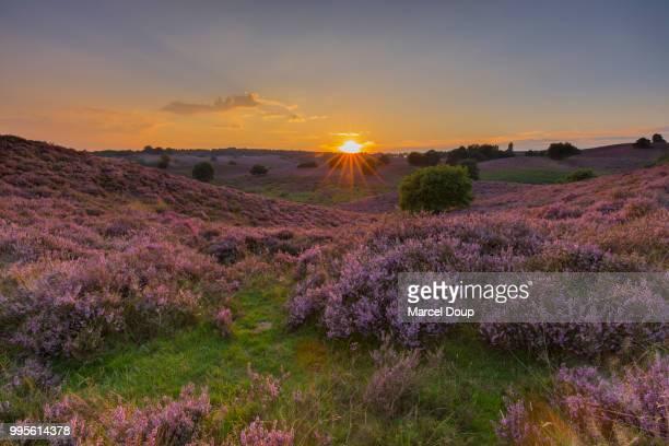 posbank sunset - posbank ストックフォトと画像