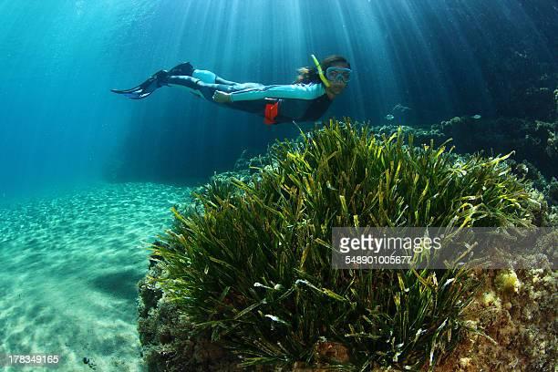 posidonia, sol y buceo - アルメリア ストックフォトと画像
