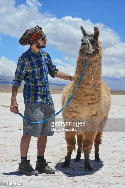posing with llama in salta province, puna desert, argentina - radicella photos et images de collection