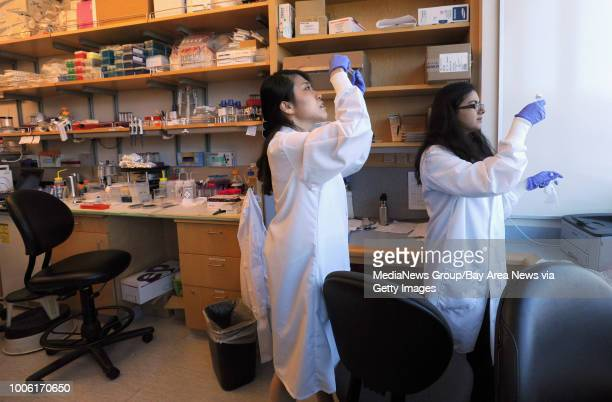 Post doctoral researcher Eun jung Kim left and PhD bioengineering student Zohora Iqbal right check membranes that may support human cells as part of...