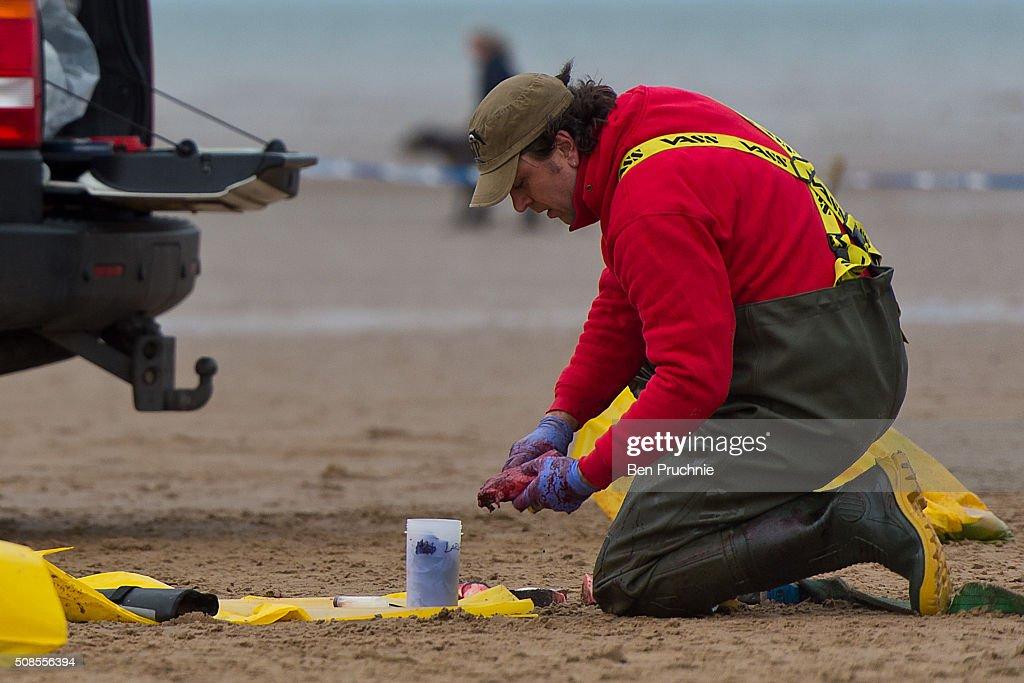 Beached Hunstanton Sperm Whale Dies : News Photo