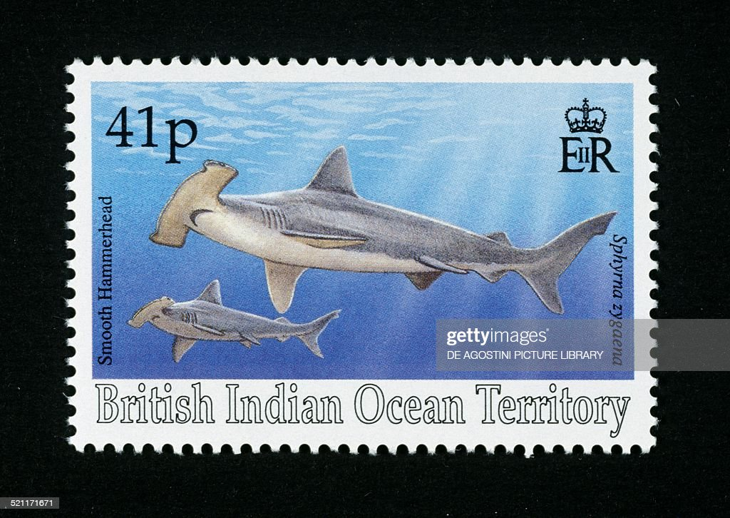 Postage stamp depicting two Smooth hammerheads... : News Photo