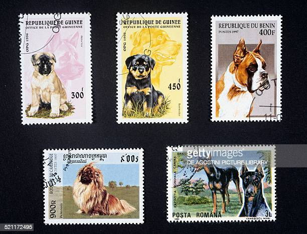 Postage stamps honouring dogs postage stamps depicting Akia and Rottweilers puppies Republic of Guinea postage stamp depicting a Bulldog Benin...