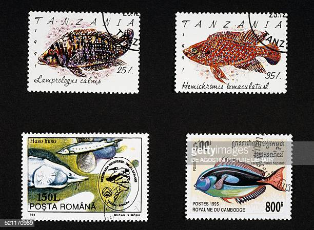 Postage stamps honouring fish top postage stamps depicting Lamprologus calvus and African jewelfish Tanzania bottom left postage stamp depicting...
