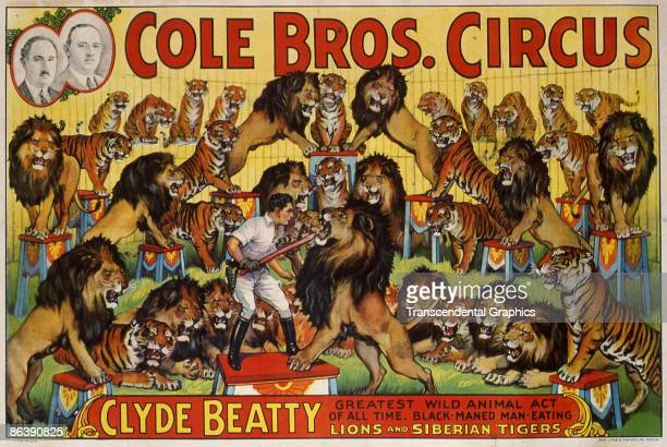 Postcard advertises the Cole Brothers Circus and its featured act wild animal trainer Cyde Beatty depicted surrounded by dozens of tigers and lions...