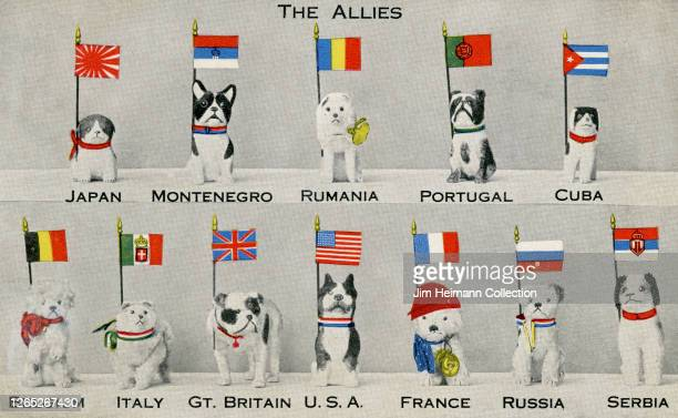 Postcard depicts 10 stuffed toy dogs holding Allied flags in their collars, circa 1917.