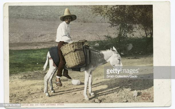 Postcard of a Mexican man holding a basket and riding a donkey with the ironic caption A Native and His Fiery Untamed Steed 1914 From the New York...