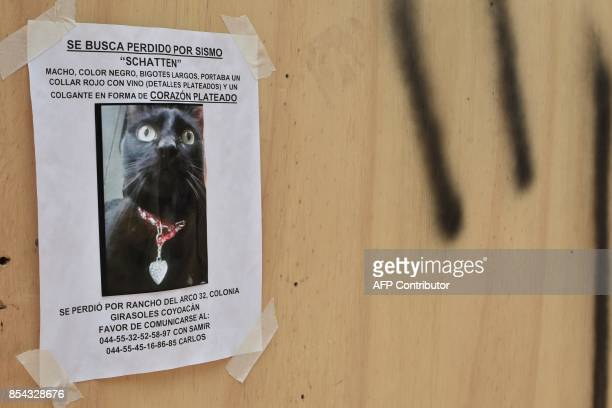 A poster about a cat that was lost during the September 19 earthquake in central Mexico is seen on a wooden wall in front of a collapsed building in...