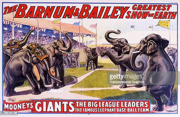 Poster for Barnum Bailey circus depicts a 'Mooney's Giants' elephant baseball team two in protectice facemasks and one with a baseball bat as they...