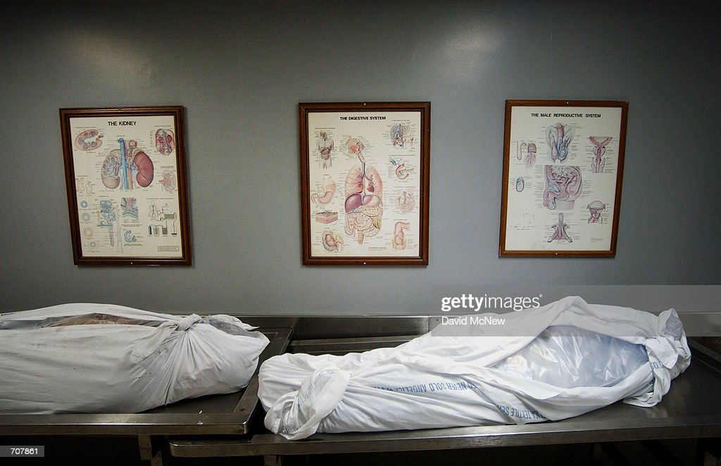 pictures to hang in office. Posters Showing Internal Body Parts Hang Above Corpes In A Hallway At The Los Angeles County Pictures To Office S