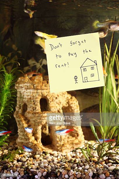 Post-it note on fish tank with rent reminder