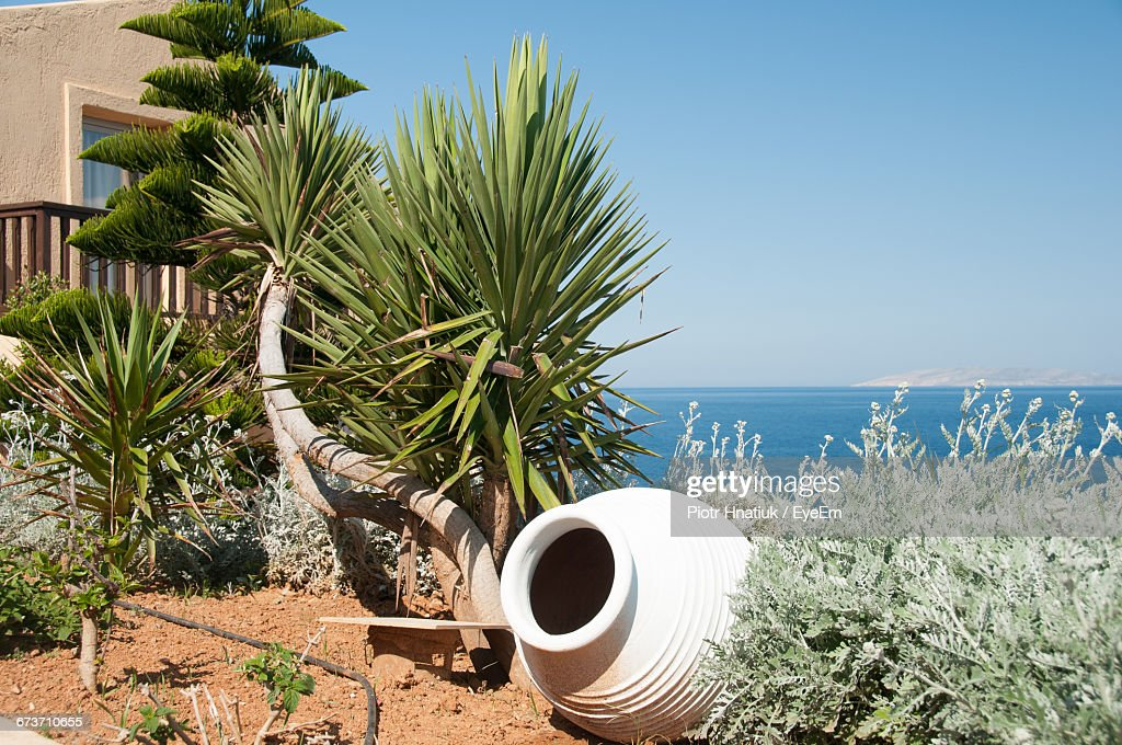 Pot And Plants By Sea Against Clear Sky : Stock Photo