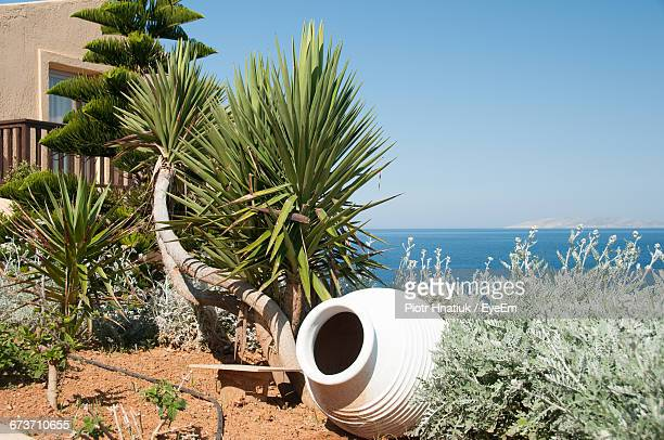 pot and plants by sea against clear sky - piotr hnatiuk imagens e fotografias de stock