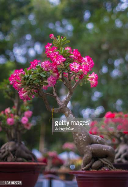1 377 Plumeria Tree Photos And Premium High Res Pictures Getty Images