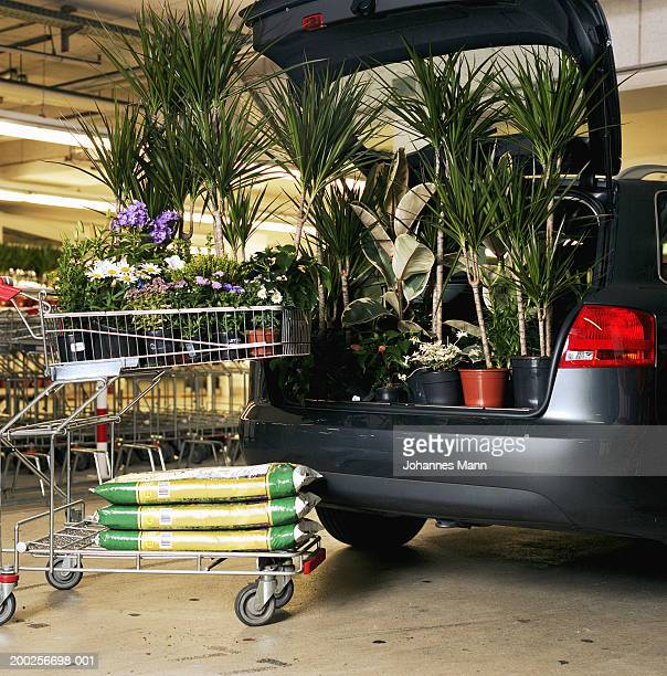 pot plants and bags of soil by plants in boot of car - caddie rempli photos et images de collection