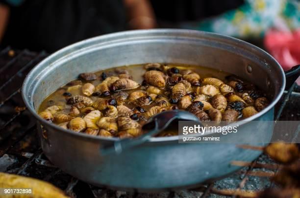 pot with edible worms - larva de mosca varejeira imagens e fotografias de stock