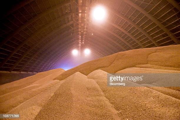 Potash is stored in a warehouse at the Potash Corp of Saskatchewan Lanigan mine in Lanigan Sasketchewan Canada on Tuesday Aug 31 2010 BHP Billiton...