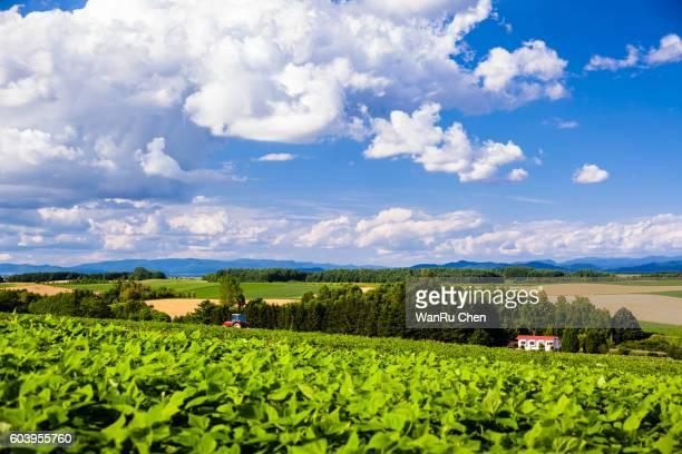 potato field of Biei, Hokkaido