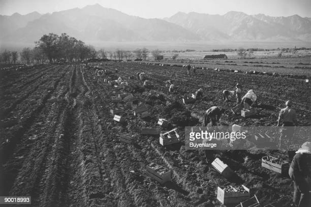 Potato Fields Ansel Easton Adams was an American photographer best known for his blackandwhite photographs of the American West During part of his...