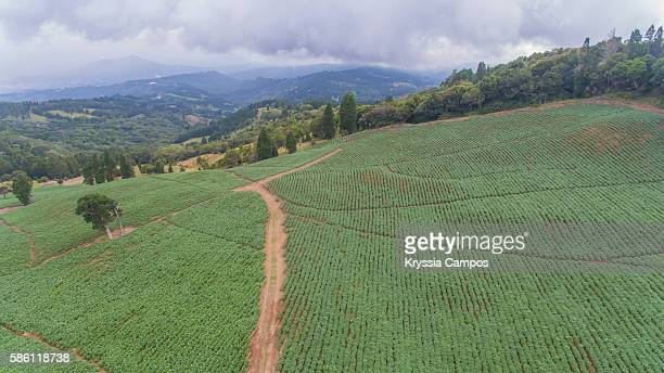 Potato Fields, Costa Rica (Aerial view)