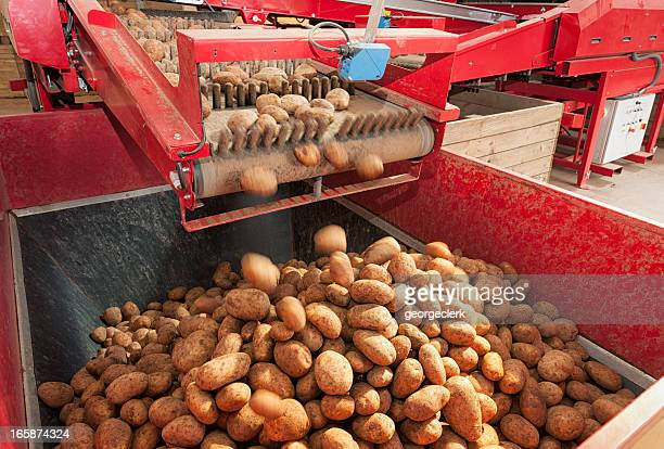 potato processing machine - red belt stock photos and pictures