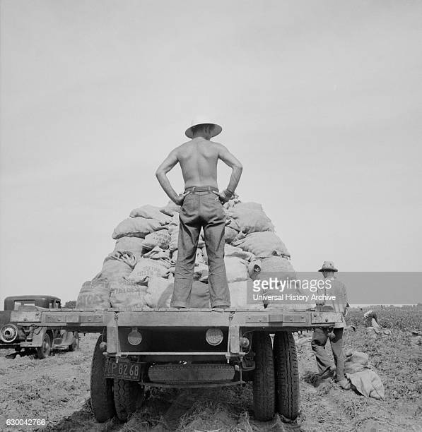 Potato Truck in Field near Shafter California USA Dorothea Lange for Farm Security Administration May 1937